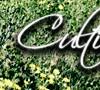 cultivate_bnr13